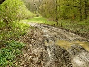 Erdei út - Szentgál után