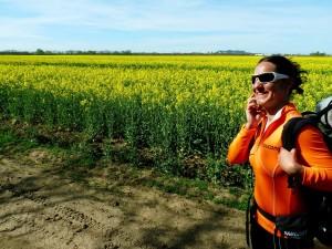 Fontos hívás a repceföldön