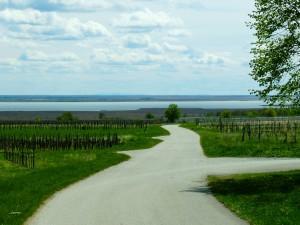 Utolsó pillantás a Fertő-tóra