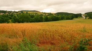Gabonatábla Le-Puy előtt