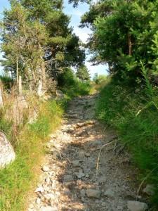 Mediterrán hangulat - tűlevelű erdők 2