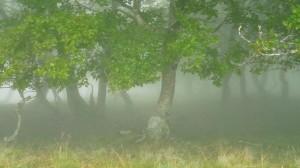 Misztikus erdő