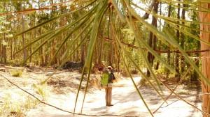 Tűlevelű és eukaliptuszerdő